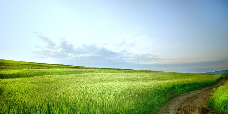 http://www.dreamstime.com/royalty-free-stock-images-rural-landscape-road-image5322869